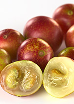 Piping Rock Camu Camu Supplements